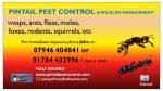 pintail pest control & wildlife management